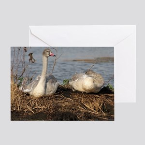 Trumpeter Swan MP Greeting Card