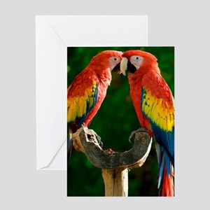 Beautiful Parrots Greeting Cards