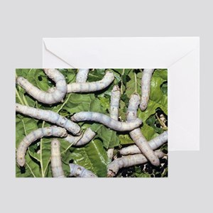 Silkworms on mulberry leaves Greeting Card