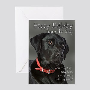 5346364bf Funny Animal Greeting Cards - CafePress