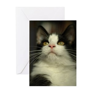 8dde081997b55f Black And White Cat Greeting Cards - CafePress