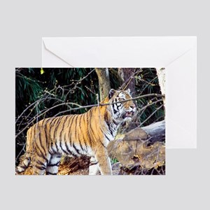 Tiger in the woods Greeting Card