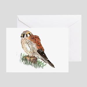 Watercolor Kestrel Falcon Bird Greeting Cards