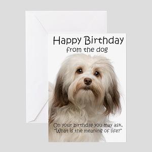 Funny Havanese Birthday Greeting Cards