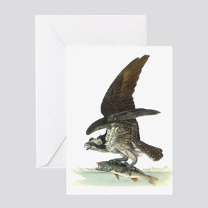 Osprey Bird Greeting Card
