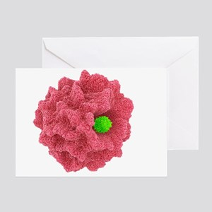 Macrophage engulfing pathogen, artwork - Greeting