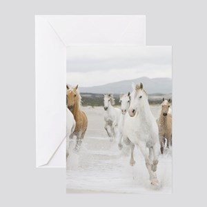 Horses Running On The Beach Greeting Cards