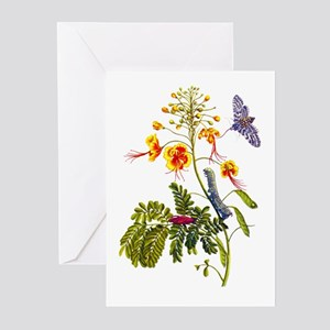 Maria Sibylla Merian Botanical Greeting Cards (Pk