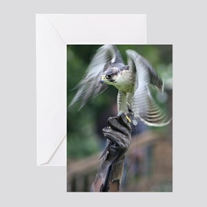Falconry Greeting Cards
