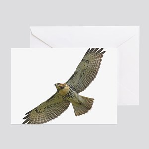 Soaring Red-tail Hawk Greeting Cards