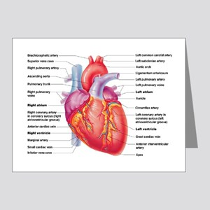 Human Heart Note Cards