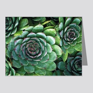 'Hens and chicks' succulents Note Cards (Pk of 10)