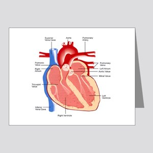 Human Heart Anatomy Note Cards (Pk of 20)
