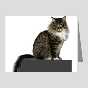 maine coon sitting tabby white Note Cards