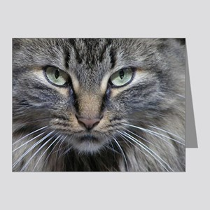 Main Coon Kitty Cat Note Cards (Pk of 20)