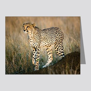 The Hunt Begins Note Cards (Pk of 20)
