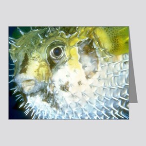 Puffer Fish Note Cards