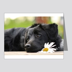 Black Lab Note Cards