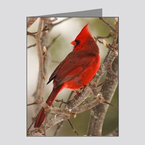 cardinal1pster Note Cards (Pk of 20)