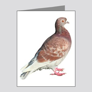 Red Pigeon (Isolated) Note Cards (Pk of 20)