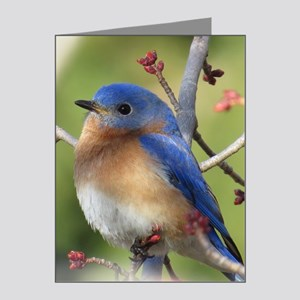 Red Bud Bluebird Note Cards