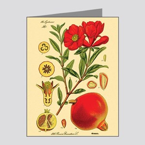 Vintage Pomegranate Note Cards (Pk of 20)