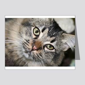 Cat Photo Note Cards (Pk of 20)