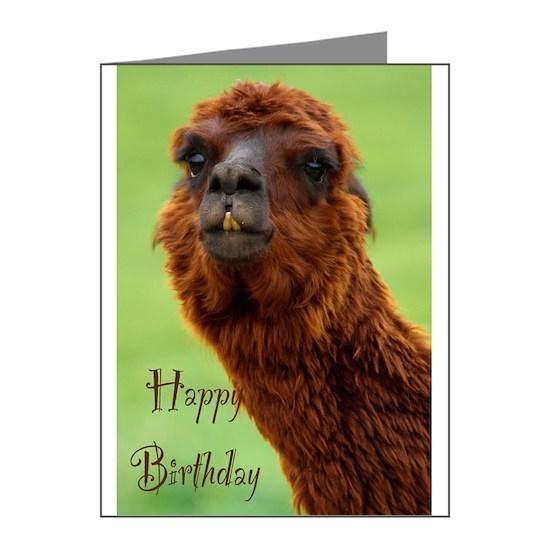 funny alpaca birthday