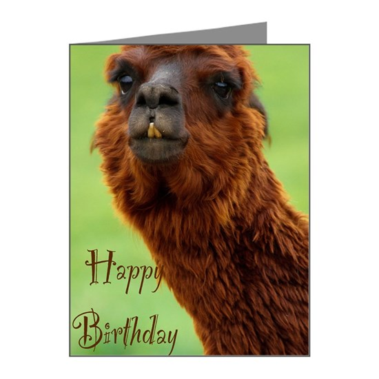 funny alpaca birthday