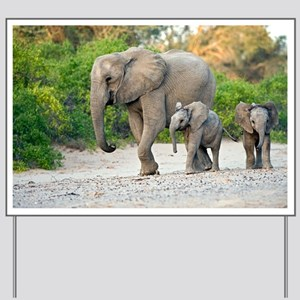 Desert-adapted elephants - Yard Sign