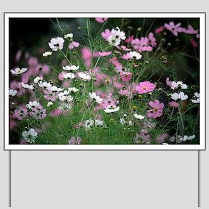 Mexican aster (Cosmos bipinnatus) - Yard Sign