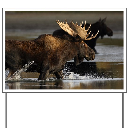 moose splashing in the water