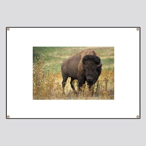 American buffalo Banner