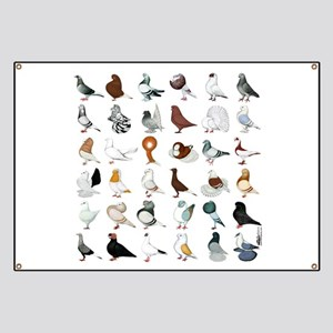 36 Pigeon Breeds Banner
