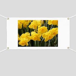 Daffodil flowers in bloom in garden Banner