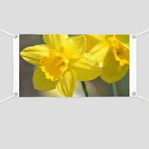 Yellow Daffodils Banner