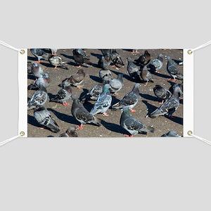 Rock pigeons - Banner