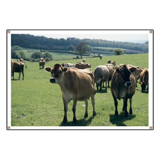 Jersey Cows Banner By Science Photo Library Cafepress