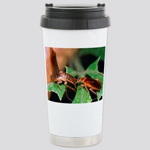 Blattellid cockroach co Stainless Steel Travel Mug