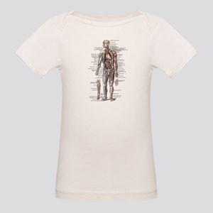 Anatomy of the Human Body Organic Baby T-Shirt