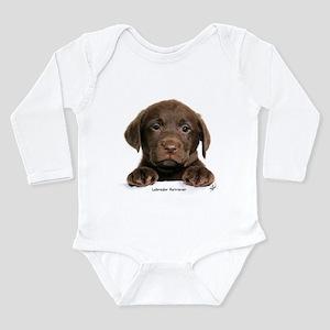 Chocolate Labrador Retriever puppy 9Y270D-050 Infa