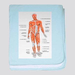Muscles anatomy body baby blanket