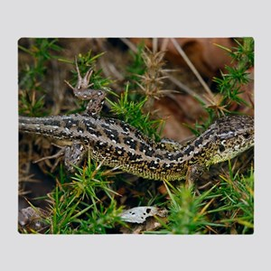Male sand lizard Throw Blanket