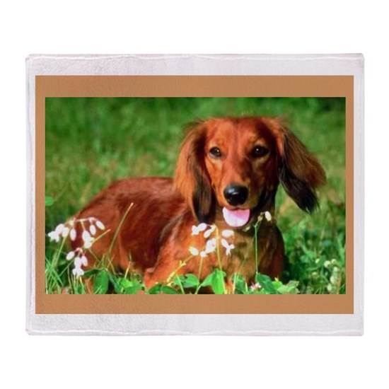 dachshund66 12x16