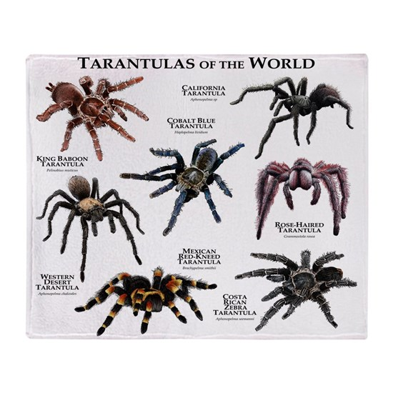 Tarantulas of the World