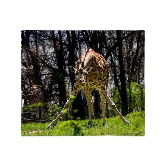 (12) Giraffe bowing