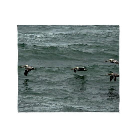 (2) ocean pelican