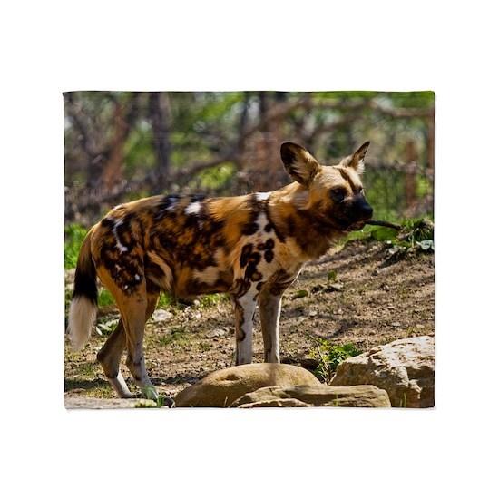 (2) African Wild Dog  1932