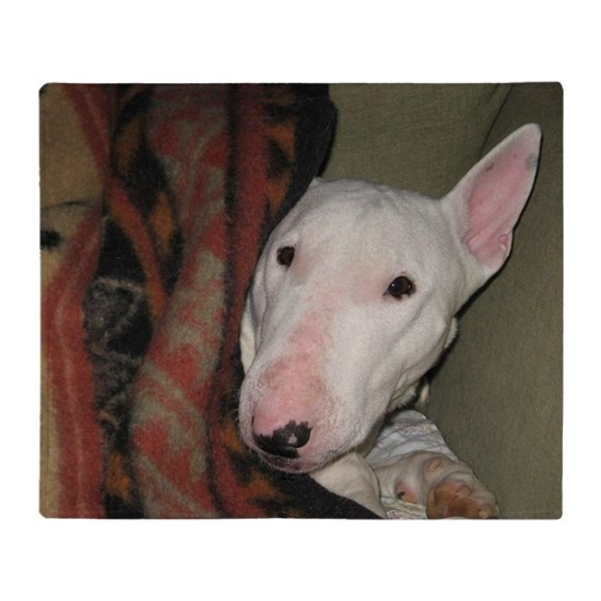 English Bull Terrier Snuggled Under a Blanket