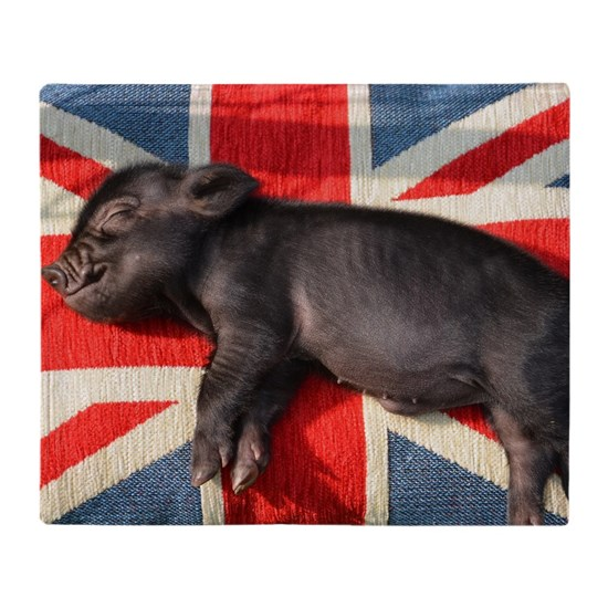Micro pig chilling